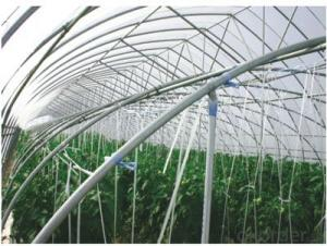 Economical Green Houses on Agricultural Market