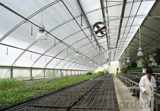 Multispan Tunnel Greenhouse for Fruit Agricultural