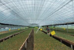 Best Economical Green Houses on Agricultural Market