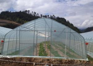 Multispan Tunnel Greenhouse for Fruit Vegetable Agricultural