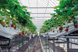 Agriculture Product Green House Material