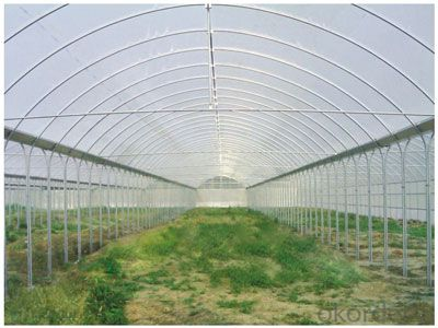 Multispan Agricultural Greenhouse for Fruit Vegetable Use