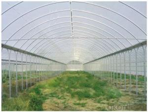 Multispan Agricultural Greenhouse for Fruit Vegetable Use
