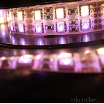 LED Strip Series with SMD 5050   DC12V and Double Row Monochromatic
