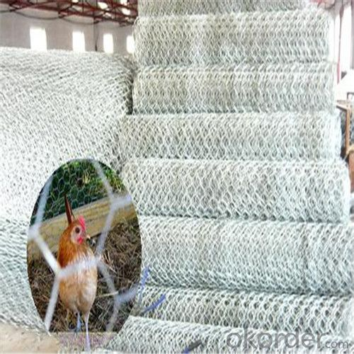 Galvanized Hexagonal Wire Mesh Chicken Wire Mes High Quality