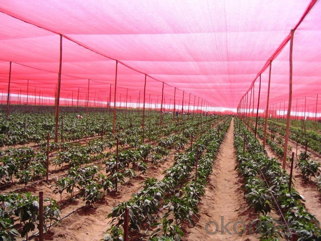 Sunshade Net Black Color 80g for Agriculture and Garden
