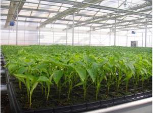 High Quality  Black PS Seeding Trays, Planting Tray, Seedling Trays, Nursery Tray