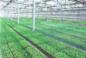 High Quality Recycled Black PS Seeding Trays, Planting Tray, Seedling Trays, Nursery Tray