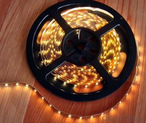 40V 240Leds/Meter 3014 Led Strip Lights