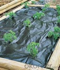 2015 New UV PP & PE Plastic Ground Cover Mesh and Weed Mat Product