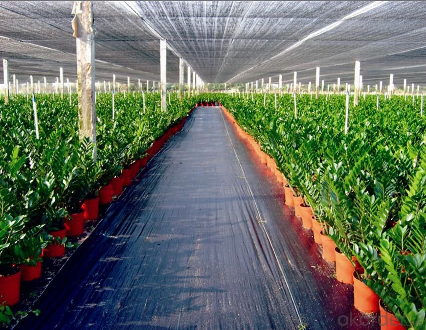 Ground Cover Weed Mat  PP woven Fabric or Cloth for Agriculture or Greenhouse