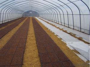 Plastic Seedling tray / Plastic Nursery Seeding Tray Seed plant propagator