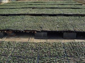 Plastic Seedling Tray / Plastic Nursery Seeding Tray Plant Propagator