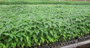 Plastic Growing Tray/Plastic Seed Tray/Plastic Seedling Tray