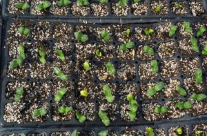 Plastic Seedling Plastic Nursery Seeding Tray Seed plant propagator