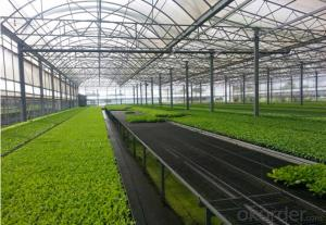 Agriculture Seed Germination Tray In Green House