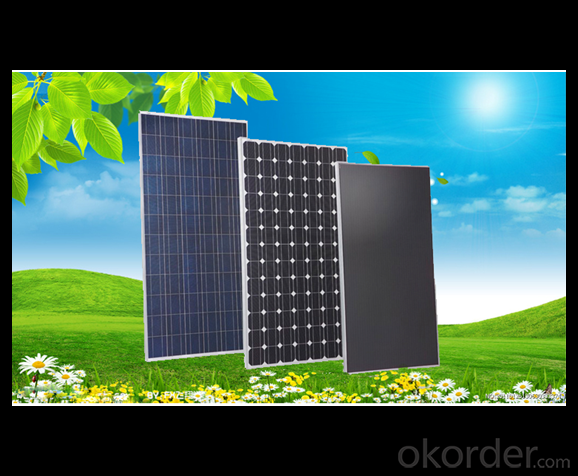 250W Direct Factory Sale Price 240-260Watt Solar Panels