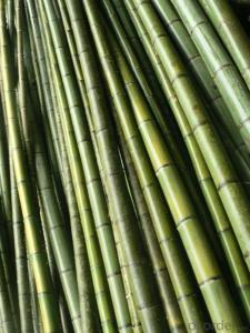 Natural Light Bamboo Cane Fence Panel Screen