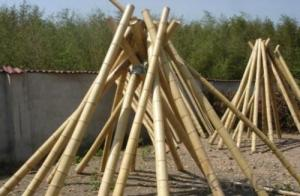 Natural Bamboo Pole Sticks Natural Bamboo