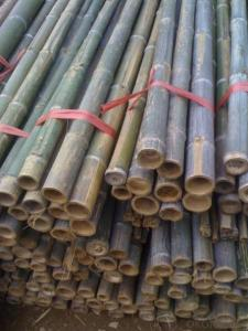 Bamboo Cane Natural Sticks Bamboo Natural