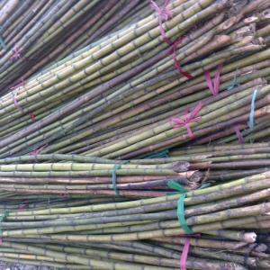 Natural White Bamboo Sticks Natural White