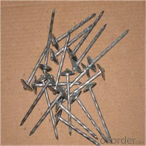 Electro Galvanized Roofing Nails Customised Different Kind of Nails