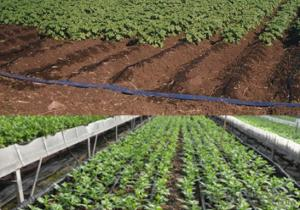 Agriculture Labyrinth Type Drip Irrigation Tape