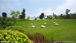 Artificial Grass for Landscaping with PPPE