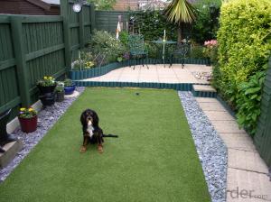 Certificate Grass Articial Grass For Dog