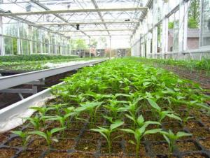 Greenhouse Usage Flat Tray Plug Trays HIPS Made Plastic  (Growing and Seedling)