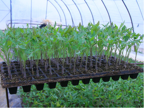 Flat Tray HIPS Made Plastic Greenhouse Usage Plug Trays (Growing and Seedling)