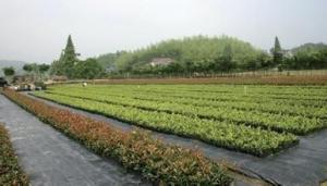 Polypropylene Woven/Weed Barrier Fabric/Silt Fence