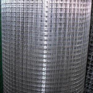 Electro Galvanized Welded Wire Mesh From Best Seller