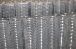 1/2''Galvanized Welded Wire Mesh in Stock