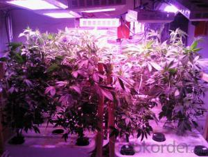 2016 New Spider LED Plant Lights, LED Grow Light