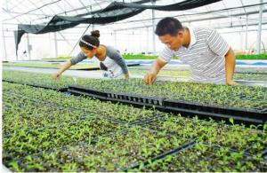 Tree Plastic Plug Seed Tray Cheap  Price
