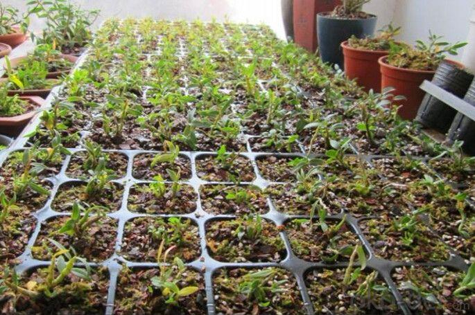 Deep Black Plastic Seedling Tray Seed Germination Tray Nursery Plug Trays