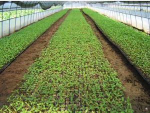 128 Cell Durable Seed Plug Trays for Agriculture Usage