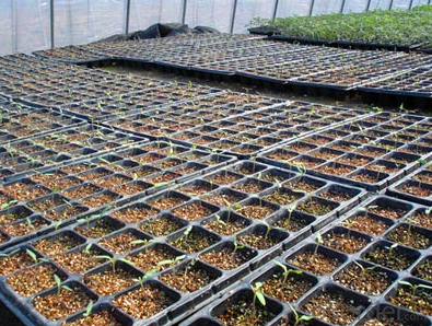 Flat Plastic Seedling Tray,Seed Tray,Plug Tray, PS Material