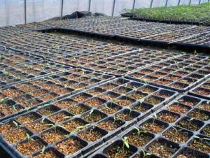 Black Plastic Nursery Plug Trays with Flat Covers