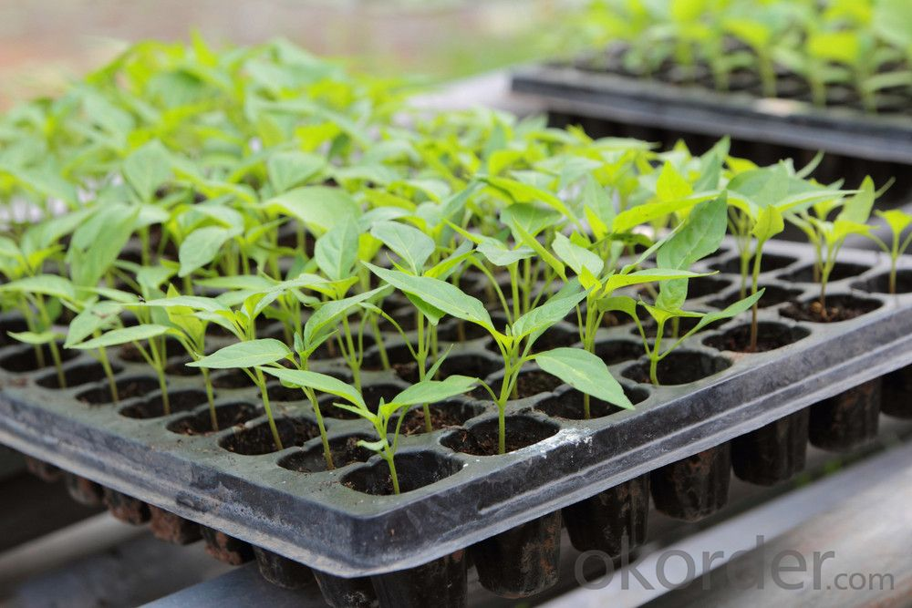 Buy 128 cells cheap tomato seedling plug seed tray price size weight
