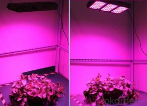 LED Grow Light Full Spectrum LED Hydro Plant Growth Lamp Panel 300W LED Grow Light