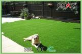 Pet Grass Green color with UV Resistance 25mm Height with comfortable touch