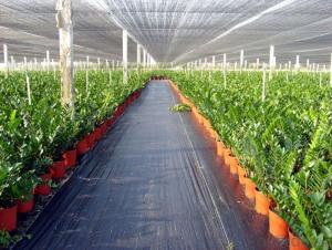 PP Woven Fabric/ Groundcover Fabric for Agriculture