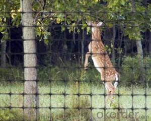 PP Plastic Netting/ Deer Netting/ Garden Netting
