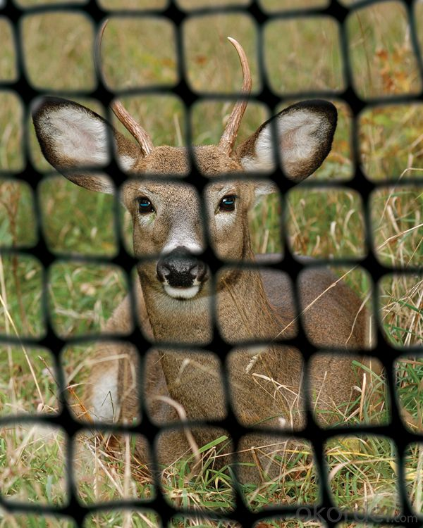 PP Plastic/Deer Netting/Garden Netting for Animal