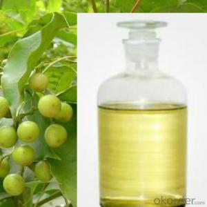 Pine Oil85% With Best Price and High Quality