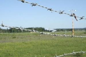 Hot DIP Galvanized /Electric Galvanized /PVC Coated Barbed Wire