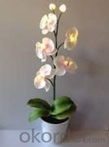 Butterfly Orchid Solar Flower Garden Light  High Quality