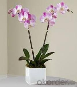 Purple Butterfly Orchid Solar Flower Garden Light